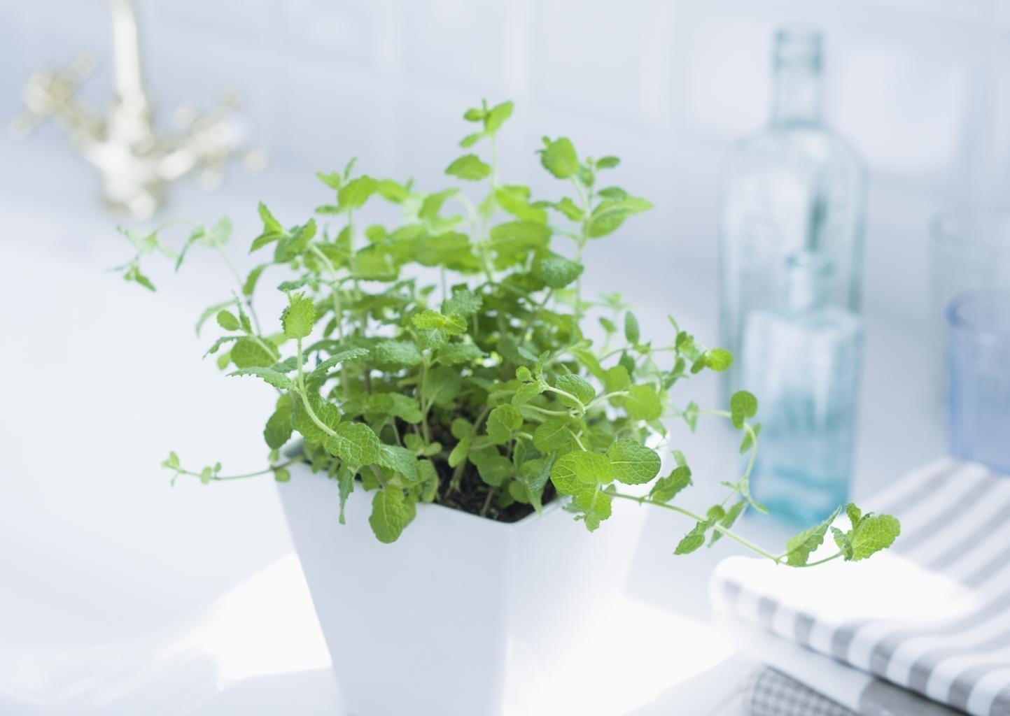 Herbs planted in white pot on a well lit counter